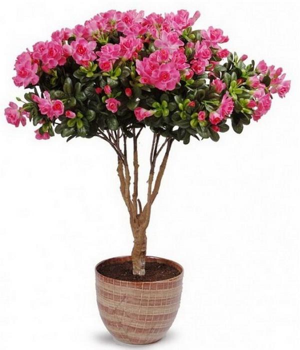 Цветы комнатные купить в днепропетровске цветы из конфет на 8 марта мастер класс
