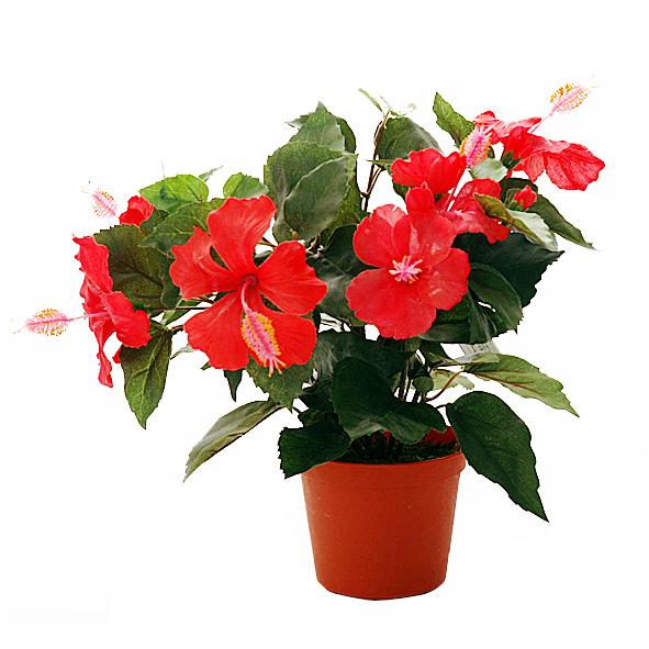 Цветы комнатные  купить