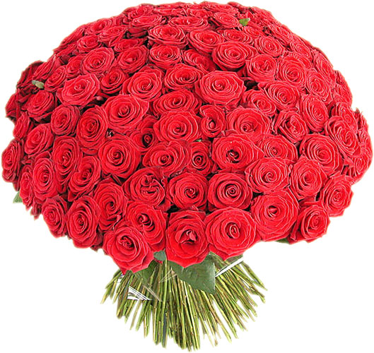Роза гран при 100 90 см эквадор