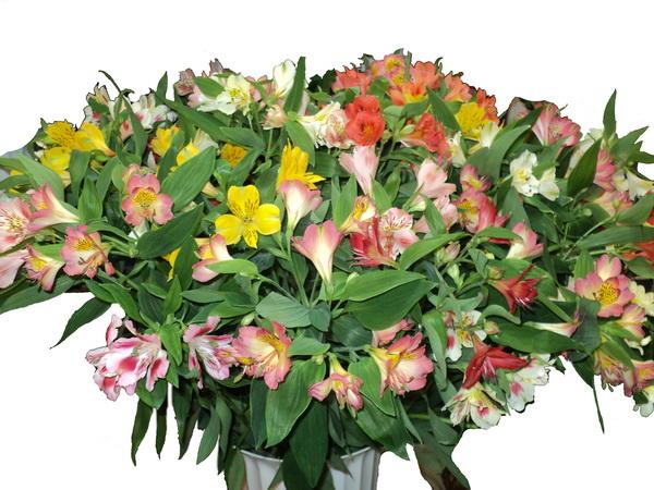 Как называются цветы похожие на лилии только маленькие