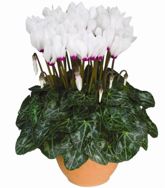 Купить домашние горшечные цветы доставка цветов по номеру телефона в краснодаре