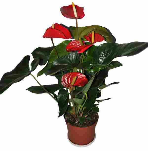 Домашнии цветы на заказ искусственные цветы для оформления витрин магазинов купить в москве